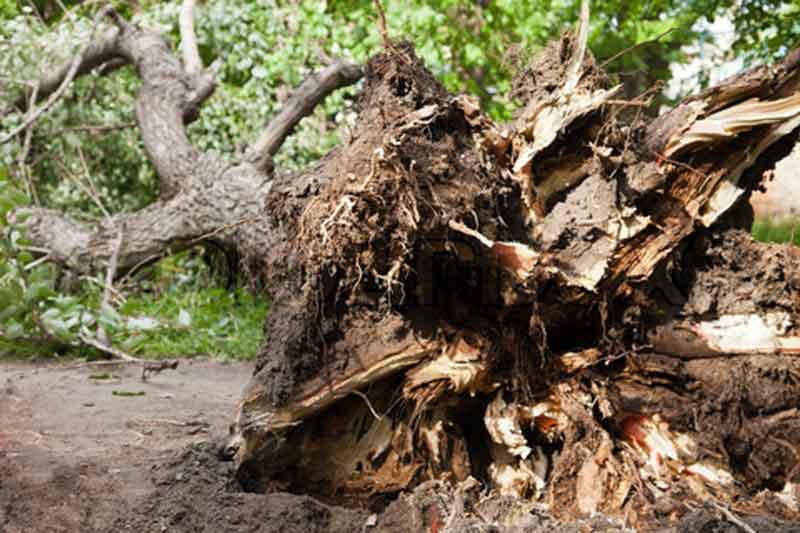 albero-rotto