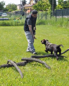 abc-dog-team-monza-2