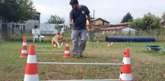 cristian-gandini-abc-dog-team