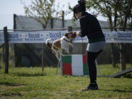 raduno cani brugherio