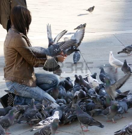 monza due morti piccioni